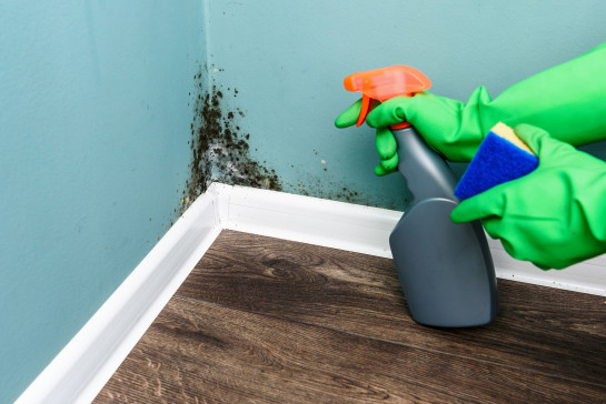 Mould and pest control 1023988243